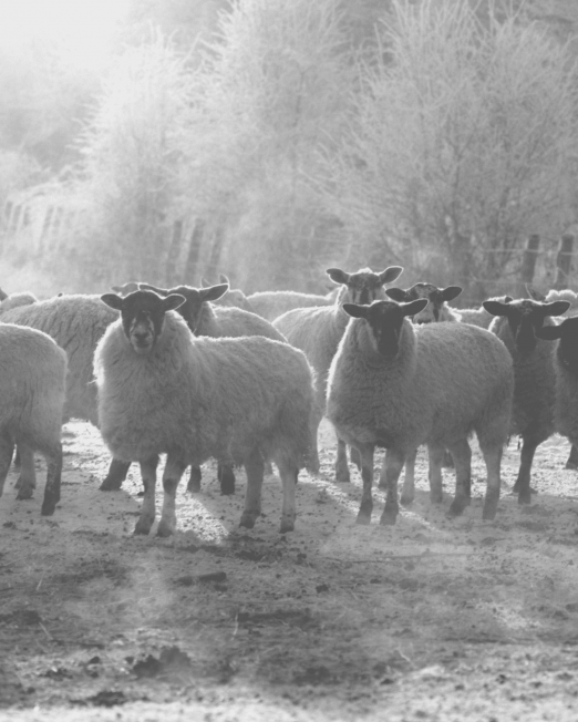 Hunters Natural Field Performance Farm Lamb Working Dog Feed For Working Sheep Dogs, Gun Dogs and Agility Dogs